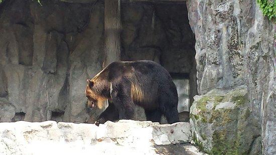 Seoul Grand Park: Loa osos