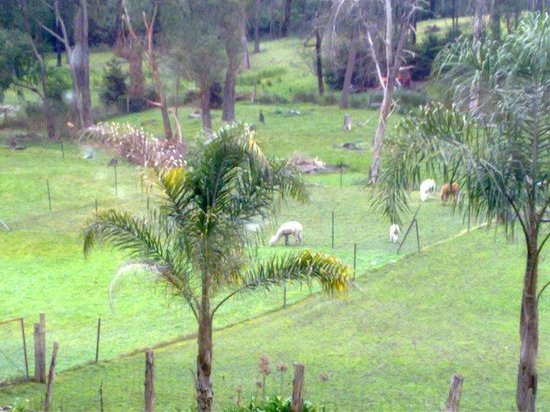 Sunway Farm Bed and Breakfast: view from the room...