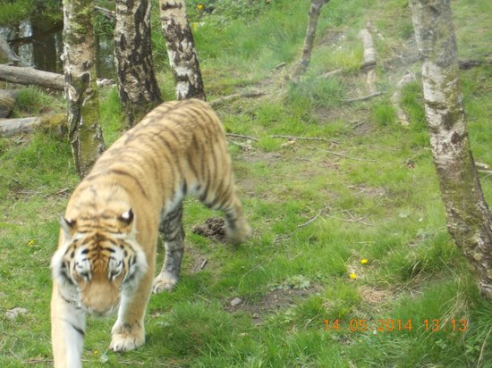 Highland Wildlife Park: close up on foot
