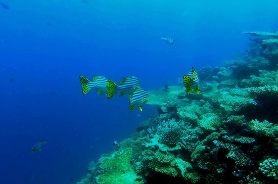 Sheraton Maldives Full Moon Resort & Spa: Snorkeling trip