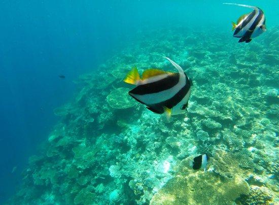 Sheraton Maldives Full Moon Resort & Spa: Snorkeling trip