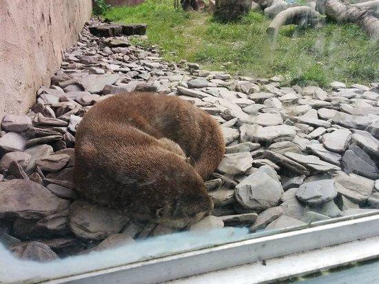 WWT Martin Mere Wetland Centre: Beaver enclosure at Martin Mere