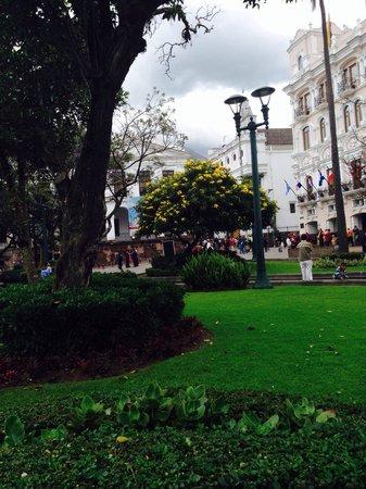 """Plaza de la Independencia (Plaza Grande): Una pianta con fiori gialli detta """"fresnos cholan"""" (bot.tecoma stans)"""