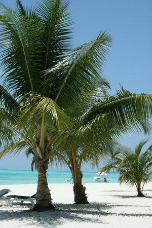 Meeru Island Resort & Spa : Cocotiers et encore et encore...