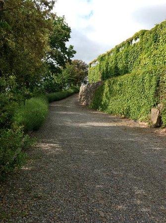 Agriturismo Al Pagan: vialetto di ingresso con cespugli di lavanda