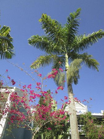 Sandals Negril Beach Resort & Spa: This is in the garden area.