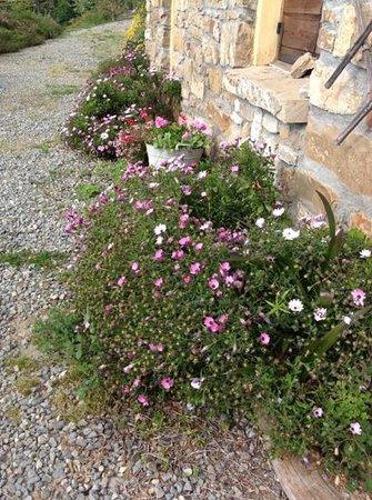 Agriturismo Al Pagan: fiori del giardino