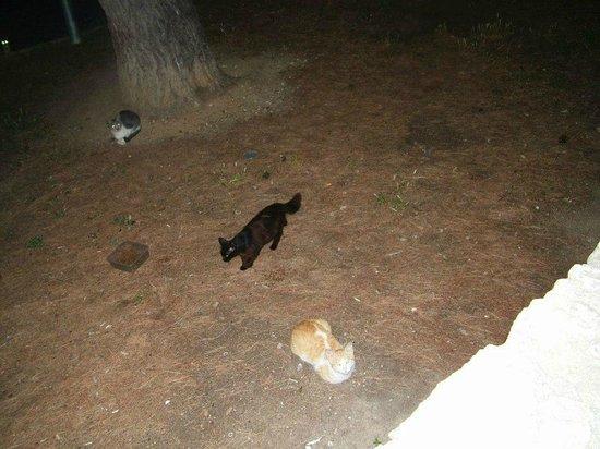 Best Negresco: stray cats