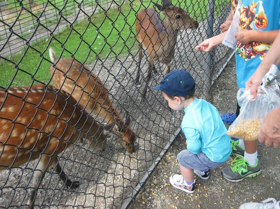 Space Farms Zoo & Museum: you can feed animals