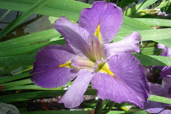 Gibraltar Botanic Gardens (The Alameda): lili in the gardens