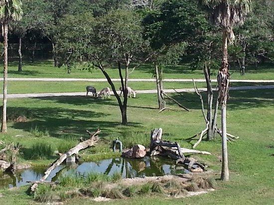 Disney's Animal Kingdom Lodge: From the balcony