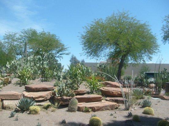 Ethel M Chocolates Factory and Cactus Garden: Kakteengarten