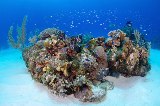 Compass Point Dive Resort: Coral Reefs Just a Short Boat Ride Away