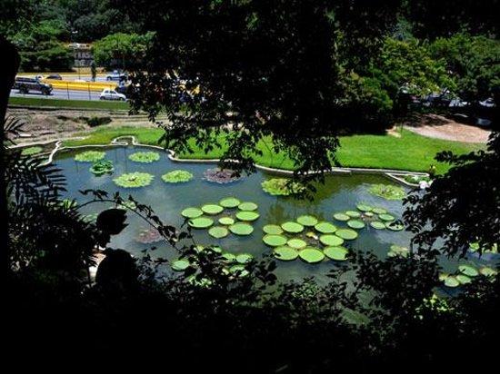 Foto de jard n bot nico caracas posee hermosas lagunas for Lagunas artificiales para jardin