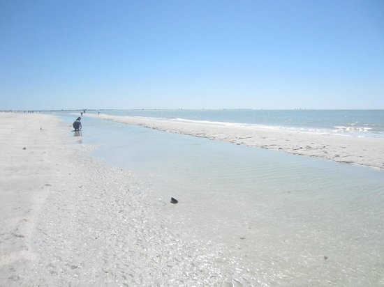 Sanibel Inn: More amazing pristine beach