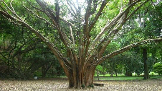 Jardín Botánico: Flora