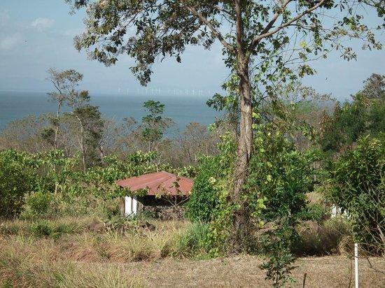 Finca Mystica: The view