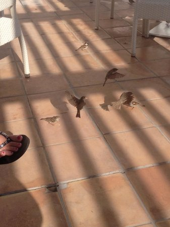 H10 Estepona Palace: Little birds on the terrace!!