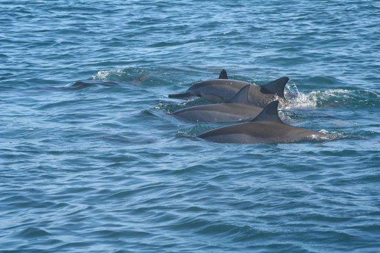 Le Morne: Delfini
