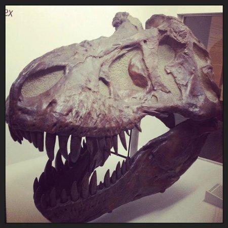 Yale Peabody Museum of Natural History: dinosaur exhibit