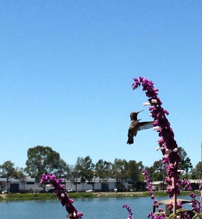 Executive Inn & Suites: Sitting by the pool with hummingbirds