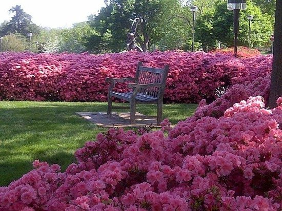 Gilcrease Museum: Gilcrease during azalea season