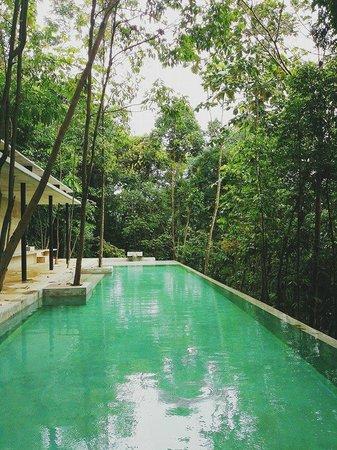 Sekeping Serendah Retreat: Infinity pool