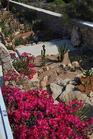 La Rosa dei Venti: Some of the Local Fauna at the Hotel