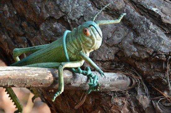 St. Andrews State Park: Cricket