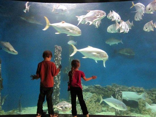Ньюпорт-Ньюс, Вирджиния: The big aquarium