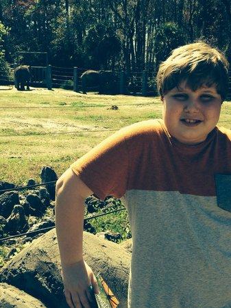 Jacksonville Zoo & Gardens : My son's favorite...elephants