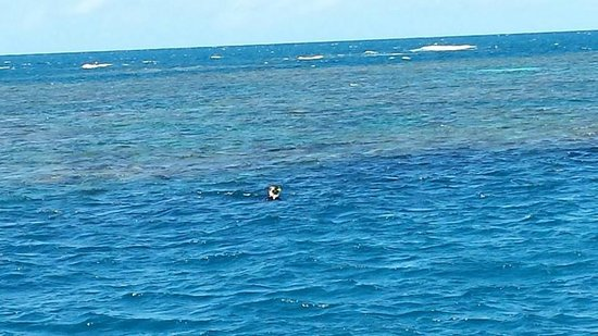 Reef Encounter: Snorkeling!