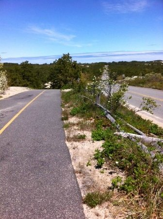 Cape Cod Provincelands Trail: View from the Trail 1