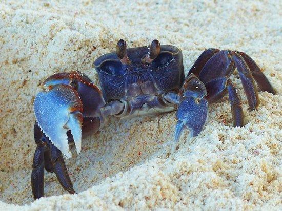 Kempinski Seychelles Resort : abendliche Besucher am Strand