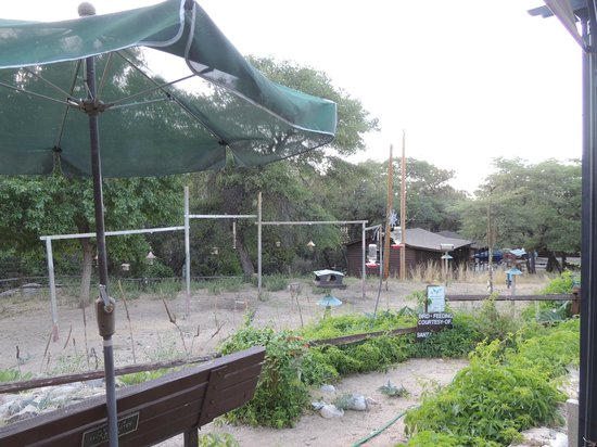 Santa Rita Lodge: Bird feeder area with seating