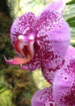 Missouri Botanical Garden : Orchid Show