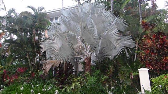 Mandalay & Shalimar Luxury Beachfront Apartments: Tropical plants