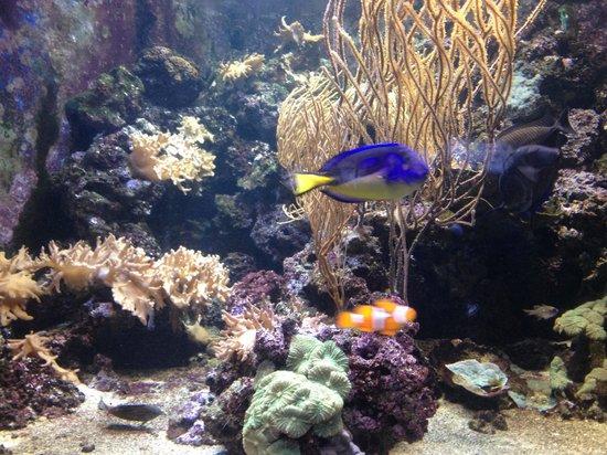 SEA LIFE London Aquarium: Amazing sea life
