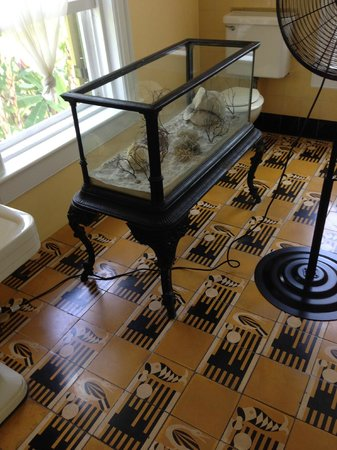 Casa y Museo de Ernest Hemingway: Tile is beautiful