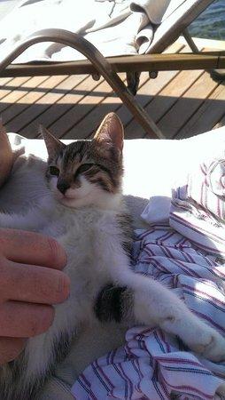 Kadikale Resort: One of the hotel kittens