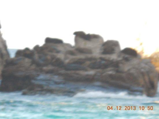 Los Arcos: sea lions