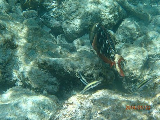 Schooner Appledore: One possible sight while snorkeling