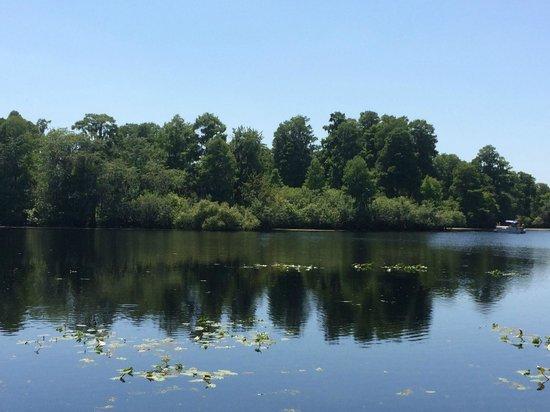 Lettuce Lake Regional Park: Water view from the boardwalk