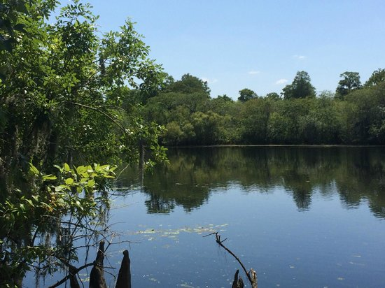 Lettuce Lake Regional Park: Another water view from the boardwalk