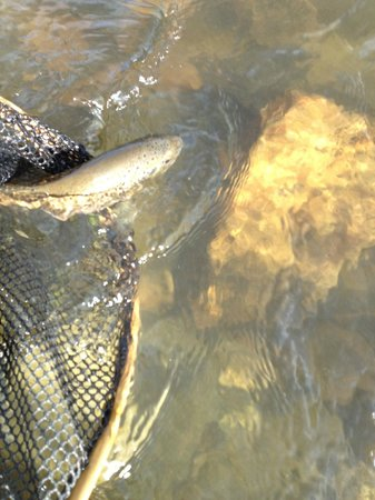 Palace Hotel: The Arkansas River and this fish were 1/2 block away.