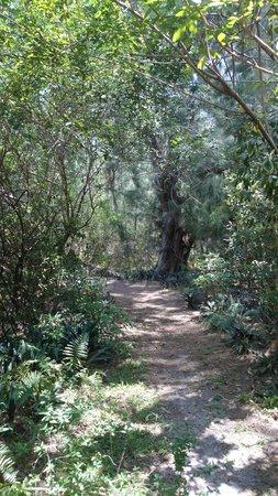 Tree Tops Park : TRAIL