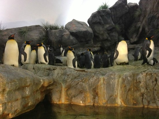 St. Louis Zoo : Emperor Penguins in the Penguin house