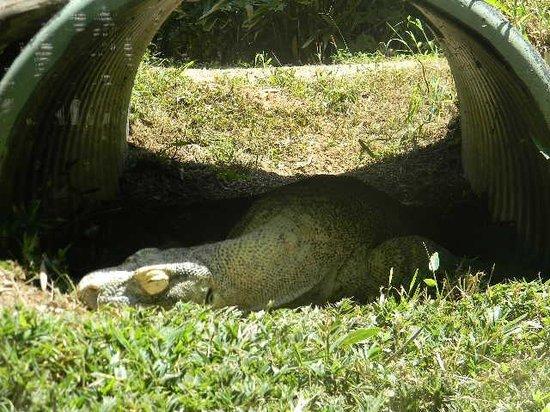 Zoo Atlanta: :D