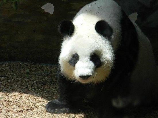 Zoo Atlanta: Awwww whatta face