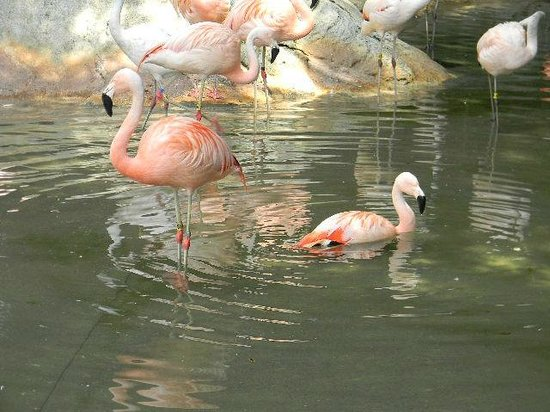 Zoo Atlanta: Flamingos at the entrance